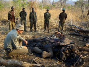 Georg Kloeble with an elephant killed by angry villagers after crop raid and harassing of people